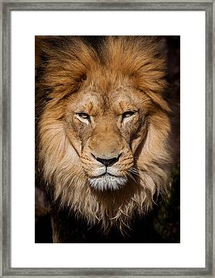 Don't Ask Framed Print by Steven Reed