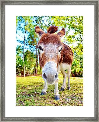 Don't Be An Ass Framed Print