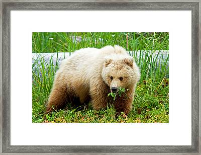 Don't Bite Off More Than You Can Chew... Framed Print