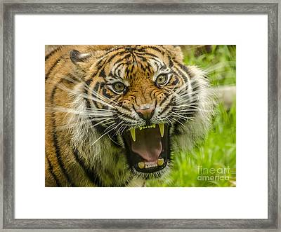 Don't Come Any Closer Framed Print by Darren Wilkes