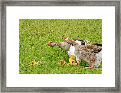 Don't Come Any Closer  Framed Print