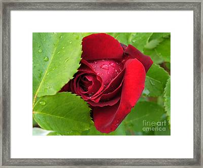 Don't Cry For Me Rosanna Framed Print