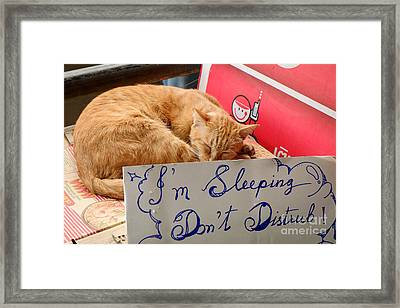Dont Disturb - Sleeping Cat Framed Print by Dean Harte