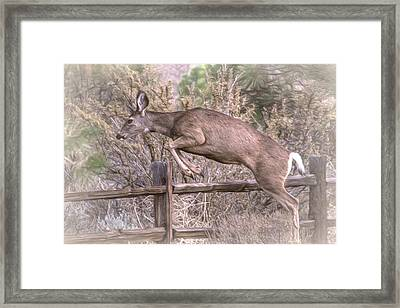 Don't Fence Me In Framed Print by Donna Kennedy