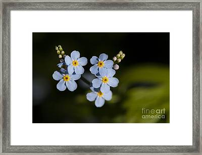Don't Forget Me... Framed Print