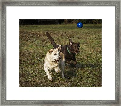 Don't Forget To Look Up Framed Print by Jean Noren