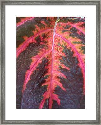 Don't Leaf Me Framed Print by Mike Podhorzer