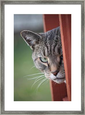 Don't Mess With Gilbert Framed Print by Jennifer E Doll