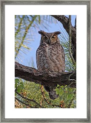 Don't Mess With My Chicks #2 Framed Print