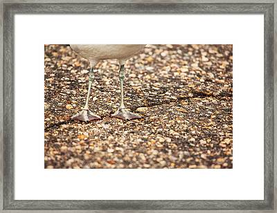 Don't Step On The Crack Framed Print by Karol Livote