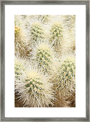 Don't Touch Me Framed Print by Craig Pavilionis