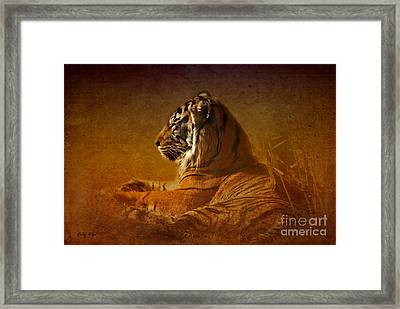 Don't Wake A Sleeping Tiger Framed Print by Betty LaRue