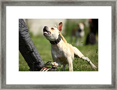 Dont You Dare To Move Framed Print by Charlie Photographer