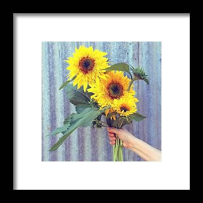 Sunflowers Framed Prints