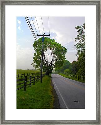 Donut Hole Tree Framed Print by Bill Cannon