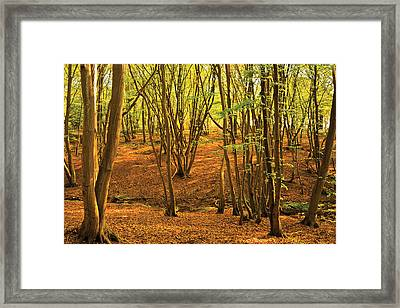 Framed Print featuring the photograph Donyland Woods by David Davies