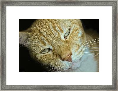 Doobie Framed Print by Joel Loftus