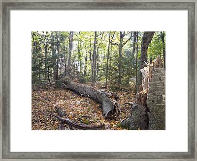Door Bluff Headlands Cp Fallen Tree Framed Print by Jim Baker