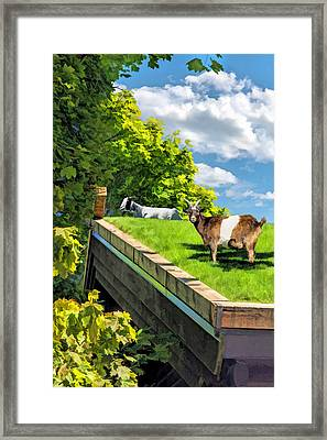 Door County Al Johnsons Swedish Restaurant Goats Framed Print by Christopher Arndt