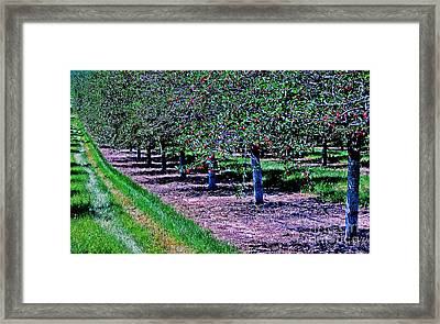 Door County Bounty Framed Print by Jim Rossol