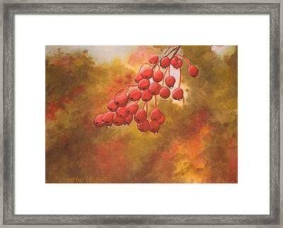 Door County Cherries Framed Print by Rick Huotari