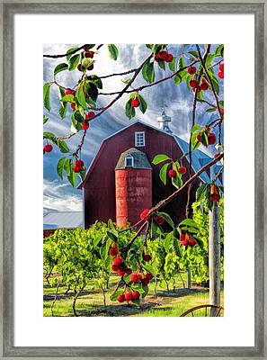 Door County Cherry Harvest Red Barn Framed Print