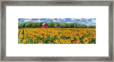 Door County Field Of Sunflowers Panorama Framed Print