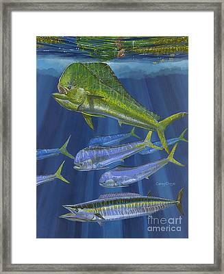 Dorado Rip Off0057 Framed Print by Carey Chen