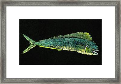 Gyotaku Dorado Framed Print by Captain Warren Sellers