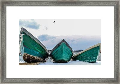 Dories And The Sea Gull Framed Print by Joe Faragalli