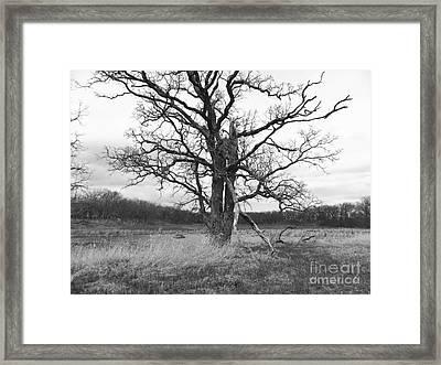 Dormant Beauty Bw Framed Print