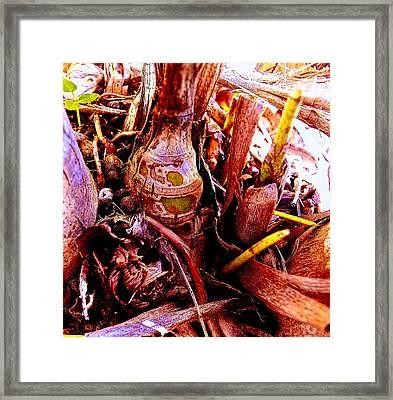 Dormant Bud Framed Print by Sandra Pena de Ortiz