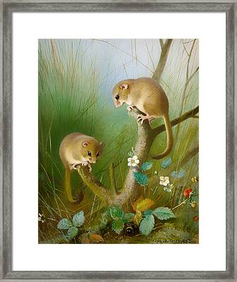 Dormice Framed Print by Mountain Dreams