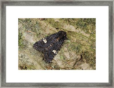 Dot Moth Framed Print by Nigel Downer