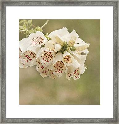 Dots-foxglove Flower Framed Print by Kim Hojnacki