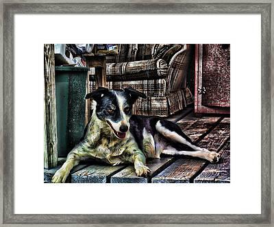 'dottie' Framed Print