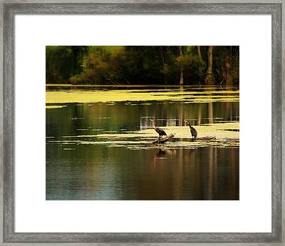 Double Crested Cormorants Framed Print by Scott Hovind