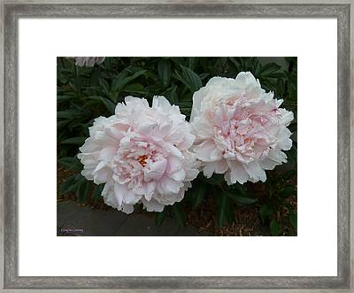 Double Delight Framed Print by Lingfai Leung