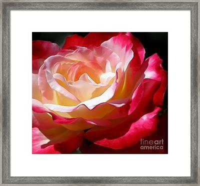 Double Delight Rose Framed Print by Kaye Menner