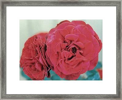 Double Desert  Red Roses Framed Print by Dusty Rose