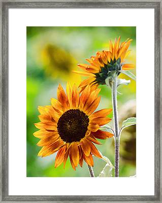 Double Dose Of Sunshine Framed Print by Jordan Blackstone