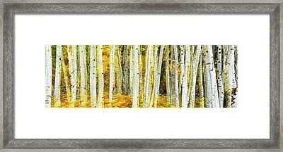 Double Exposure Of An Aspen Grove Framed Print by Panoramic Images