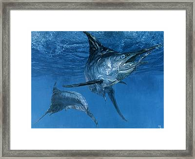 Double Header Makaira Nigricans, Blue Framed Print by Stanley Meltzoff / Silverfish Press