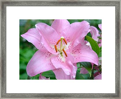 Double Lily 3 Framed Print by Bob Gross