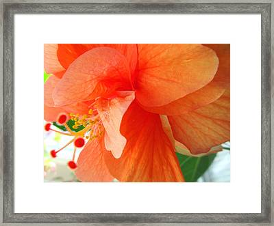 Double Peach Framed Print