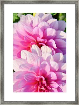 Double Pink Framed Print by Kathleen Struckle