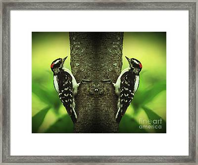 Double Pleasure- Woodpeckers Framed Print by Inspired Nature Photography Fine Art Photography