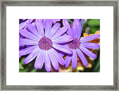 Double Purple Framed Print