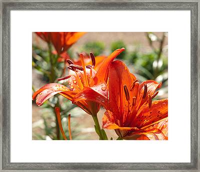 Double Reds Framed Print by Lena Wilhite