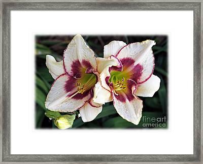 Double The Bloom Framed Print by Elizabeth Winter
